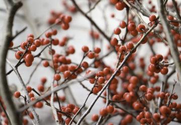 Montessori: Weihnachten ohne Weihnachtsmann Mamablog
