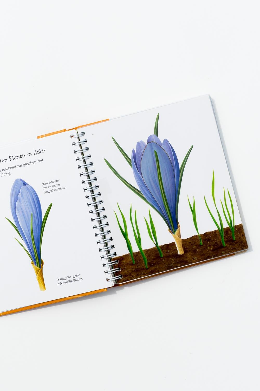 """""""Die Blume"""" aus der Meyers Kinderbibliothek. Ein Blick ins Buch sowie eine Buchrezension auf dem Blog """"Chez Mama Poule"""". Sommerbücher, Bilderbücher für Kinder, Bücher für Kita oder Kindergarten. Realistische Bilderbücher."""