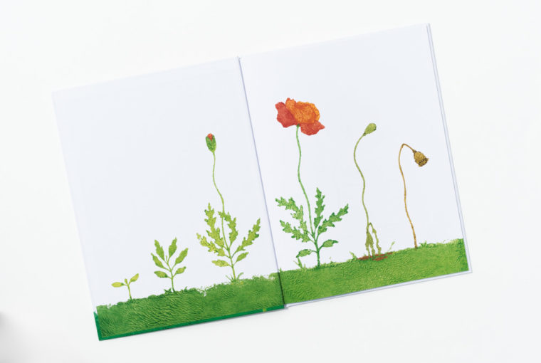 """Bilderbuch """"Lisas Mohnblume"""" von Markus Pfister. Ein Blick ins Buch sowie eine Buchrezension auf dem Blog """"Chez Mama Poule"""". Sommerbücher, Bilderbücher für Kinder, Bücher für Kita oder Kindergarten. Realistische Bilderbücher."""