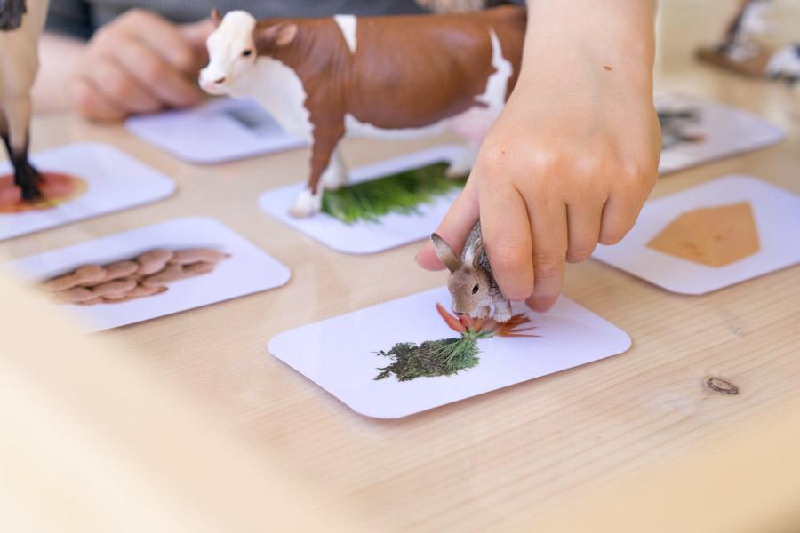 Was fressen die Tiere? Hase z.B. mag Karotten